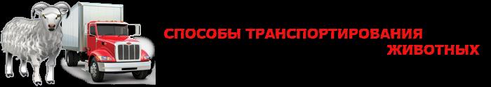 img-transportirovka-givogo-gruza-povsei-rossii-ttkslcomsaptrans-ru-com-002