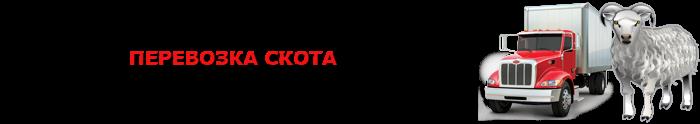 img-transportirovka-givogo-gruza-povsei-rossii-ttkslcomsaptrans-ru-com-003