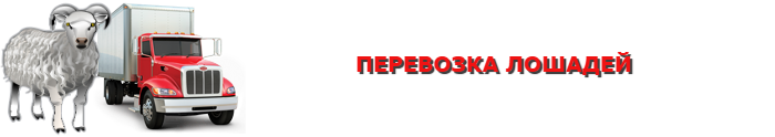 img-transportirovka-givogo-gruza-povsei-rossii-ttkslcomsaptrans-ru-com-004