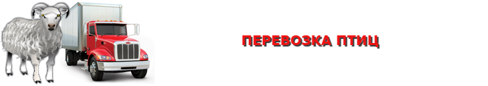 img-transportirovka-givogo-gruza-povsei-rossii-ttkslcomsaptrans-ru-com-006