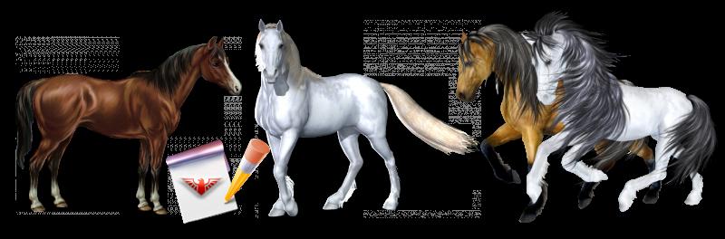 work-perevoz-88-950-perevozka-loshadei-po-russii-ttk-sl-horses-021-088-010