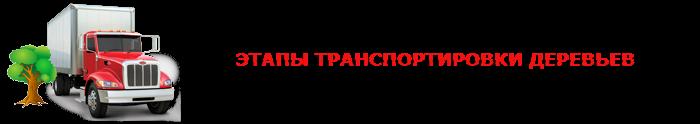 perevozka-dereviev-ttk-sl-0013