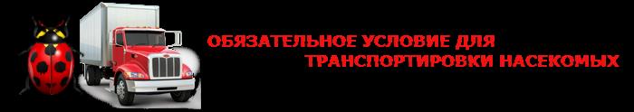 perevozka-nasekomuh-ttk-sl-007