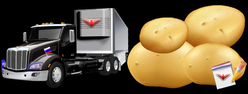 potatoes-perevozka-ttk-sl-com-kartofeli-rus-105