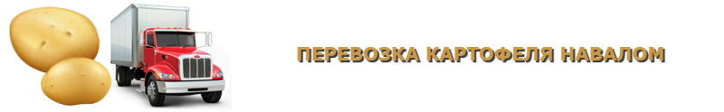 potatoes-perevozka-ttk-sl-com-kartofeli-rus-106