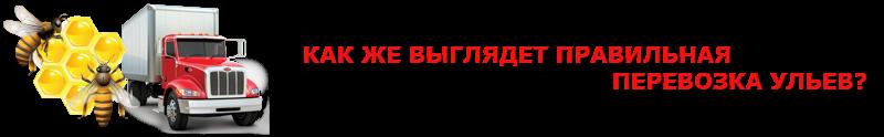 perevoz-med-yliu-ttk-sl-com-medik-4997557224-_15