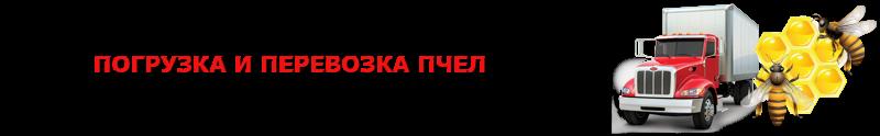 perevoz-med-yliu-ttk-sl-com-medik-4997557224-_16