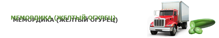 img-00-perevozka-svegih-ogurcov-ttk-sl-0014