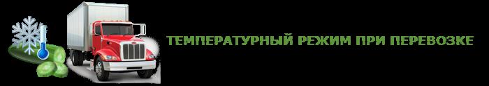 img-00-perevozka-svegih-ogurcov-ttk-sl-0039