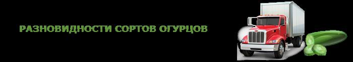 img-00-perevozka-svegih-ogurcov-ttk-sl-009
