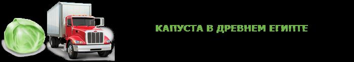 img-047-perevozka-kapustu-ttk-sl-com-kap-0115