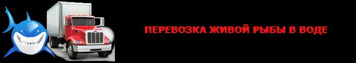perevozka-givoi-fish-ttk-sl-com-06