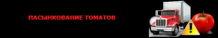 perevozka-pomidor-ttk-sl-0025