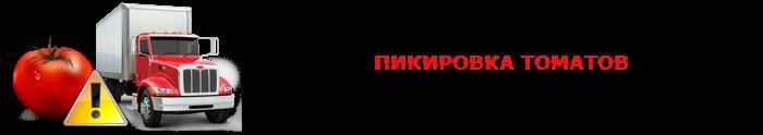 perevozka-pomidor-ttk-sl-0028