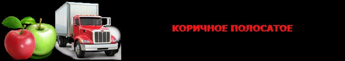 work-perevoz-applle-ttk-sl-com-psvuy-458