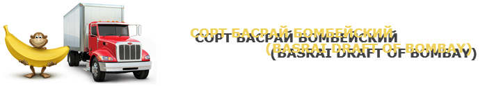 work-perevoz-musa-bananu-ttk-sl-com-047-011