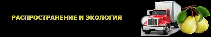 img-000135-o-grushe-citrus-ttk-sl-com-grushi-901