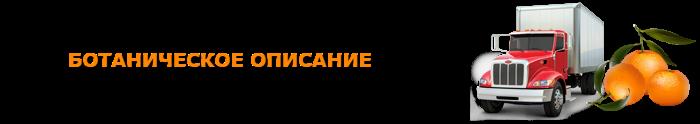 img-555-o-mandarinah-citrusovue-ttk-sl-com-101
