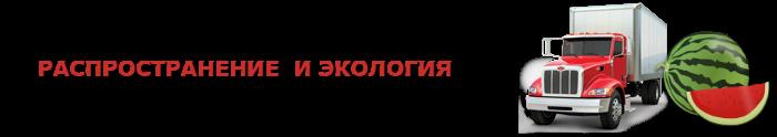 work-perevoz-arbuzu-ygoda-ttk-sl-0606