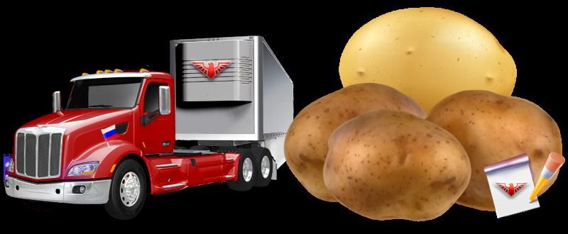 potatoes-perevozka-ttk-sl-com-kartofeli-rus-70