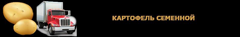 potatoes-perevozka-ttk-sl-com-kartofeli-rus-71