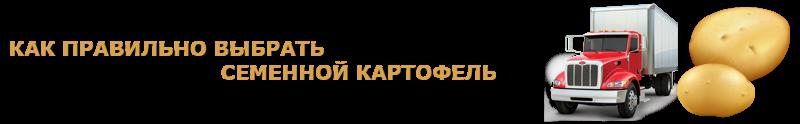 potatoes-perevozka-ttk-sl-com-kartofeli-rus-72