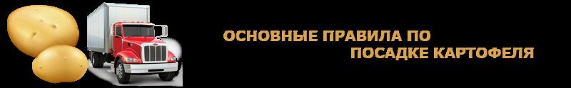 potatoes-perevozka-ttk-sl-com-kartofeli-rus-79
